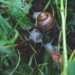 Accurate Termite Control - Snails