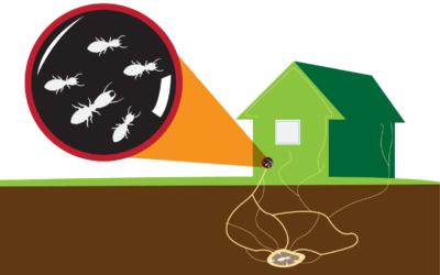 Subterranean Termite Control Treatment Methods