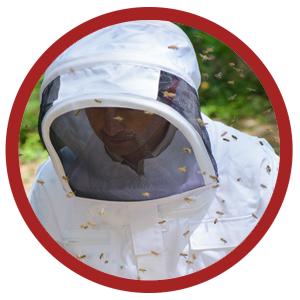 bee removal suit