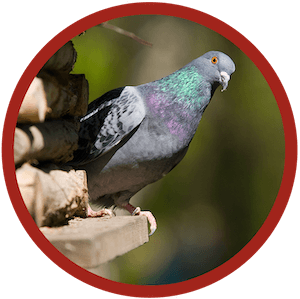 Bird-Control-Services-Accurate-Termite-Control