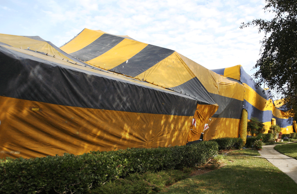 Can fumigation cause damages to my home?