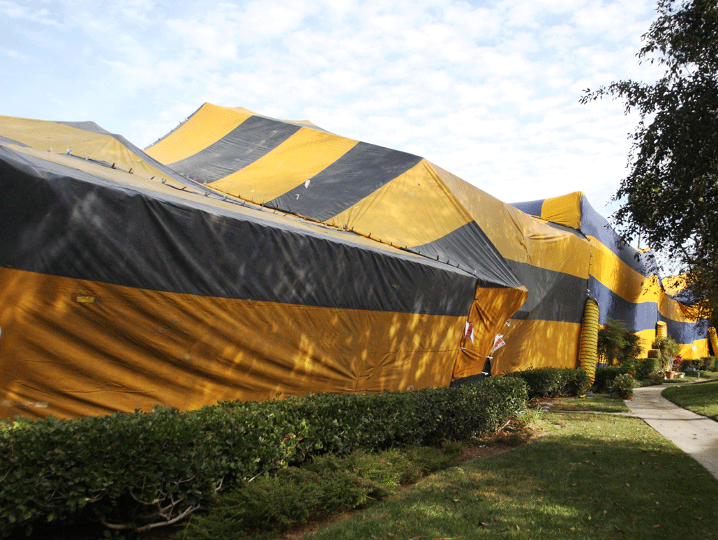 Damage Caused By Fumigation Process Accurate Termite