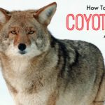 keep coyotes away