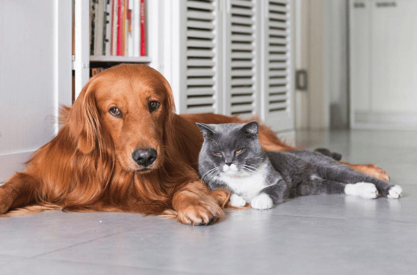 Dog Cat - Flea-Borne Typhus