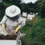 How to Safely Get Rid of Bees and Beehives - Accurate Termite and Pest Control Blog