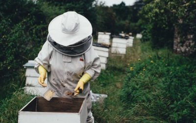 How to Safely Get Rid of Bees and Beehives