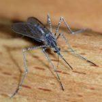 Mosquito-bourne Zika Virus - Accurate Termite and Pest Control