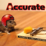 Mouse Helmet - Accurate Termite and Pest Control