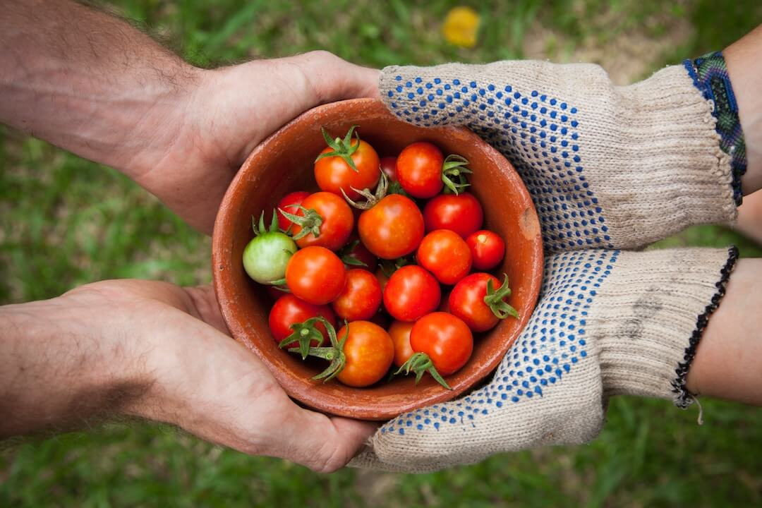Organic Gardening - Accurate Blog