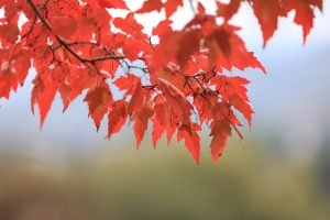 Pest Prevention Tips for the Fall