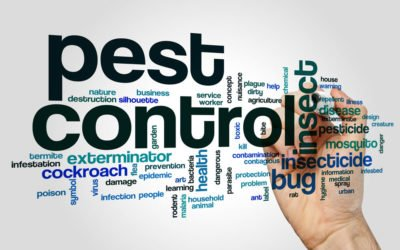 Which Pest Control Treatment is best for my home interior?