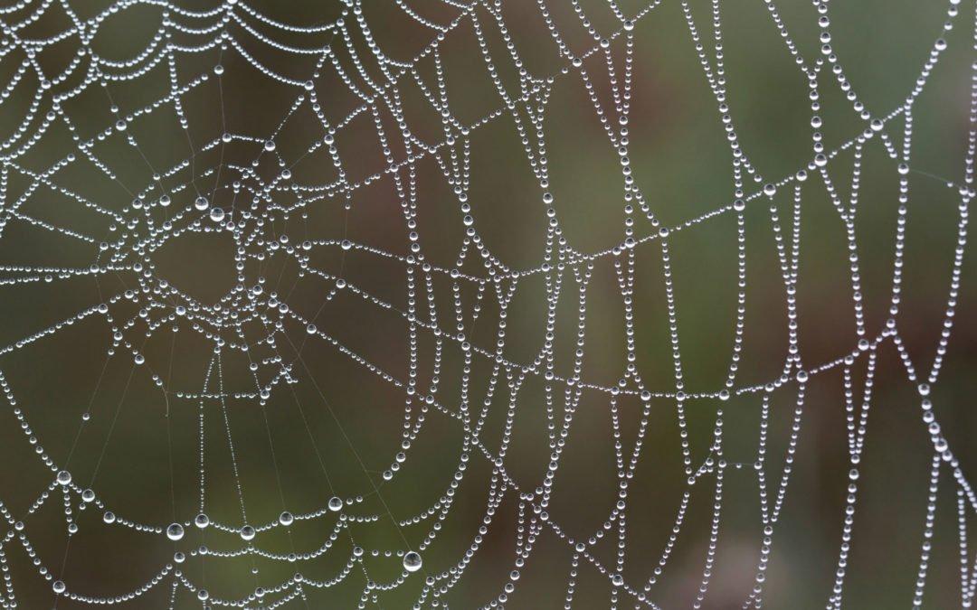 Black Widow Spiders: Panic maybe?