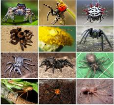 Spiders-Top 5 Interesting Facts - Accurate Termite and Pest Control