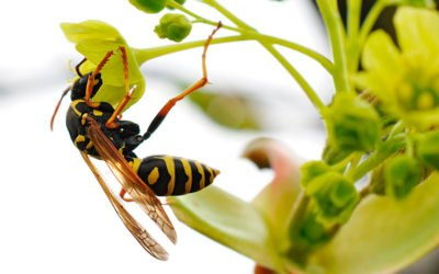What You Need to Know About Yellowjackets