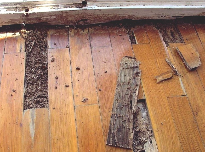 How can I prevent a termite infestation